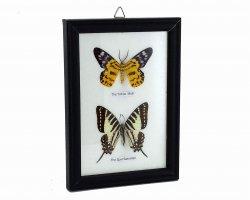 تابلو طرح پروانه در فروشگاه اینترنتی